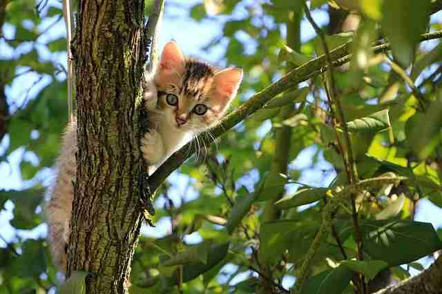cat peeking from up a tree