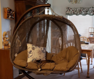 swinging chair with cat completely relaxed and asleep